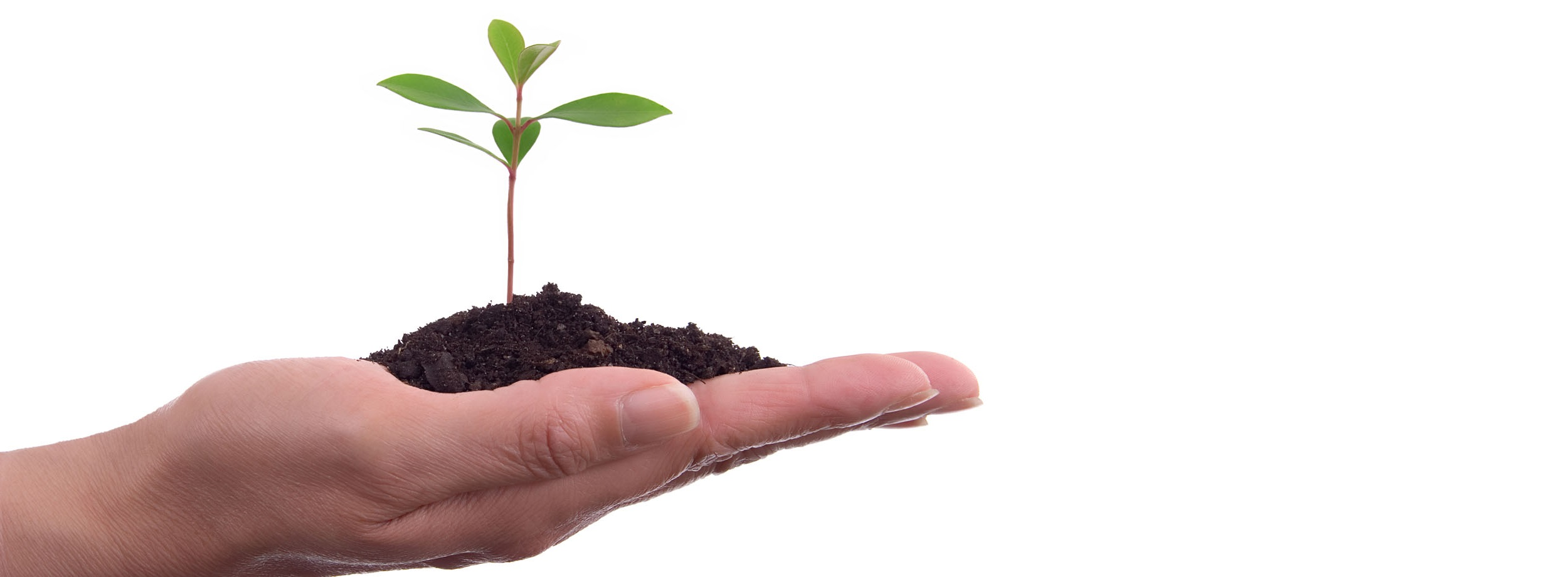 Human Hands With Plant